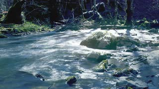 water-flowing-river-timelapse-timelapse-flowing-water-from-a-river-in-a-forest_bv43epgg__S0000